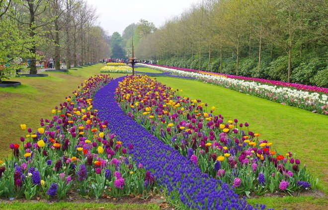 Be amazed at the famous Keukenhof, one of the world's largest and most beautiful gardens. We will be visiting at an ideal time, spring, when over 7 million bulbs will be in bloom including an astonishing 800 varieties of tulips.